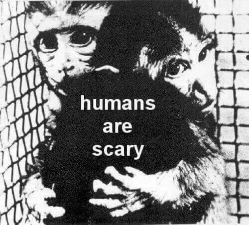 Humans should be ashamed of the way animals have been treated and exploited. Go vegan, live with compassion.