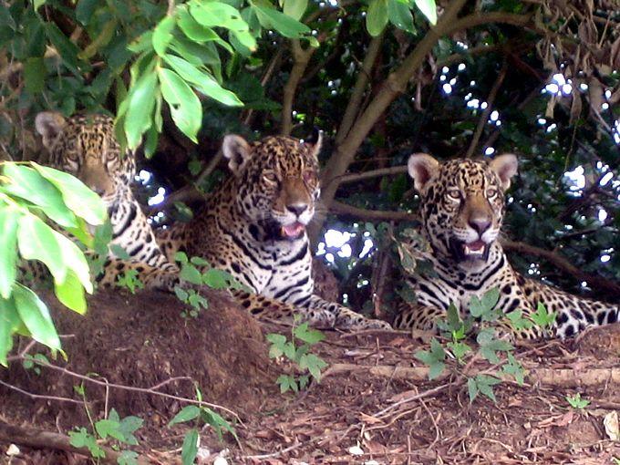 Pantanal | Pantanal Tours - Pantanaltrekking - Ecological Expeditions