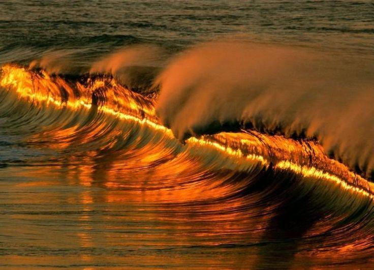 Golden wave at sunset