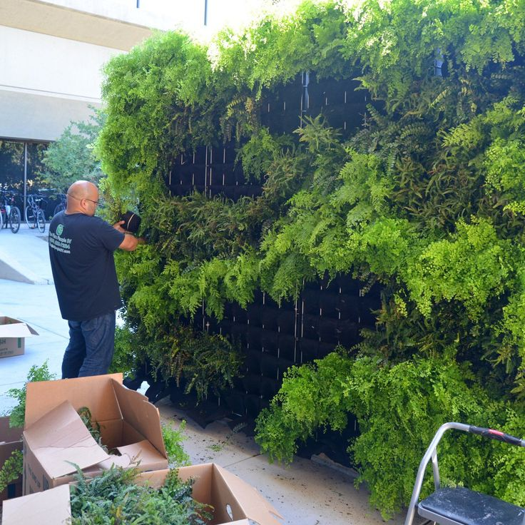 Fern Wall Vertical Garden for a startup in, Palo Alto, California by Chris Bribach of Plants On Walls using the Florafelt Pro System. Plants and design by Arnulfo DelReal of The Plant People, Palo Alto.
