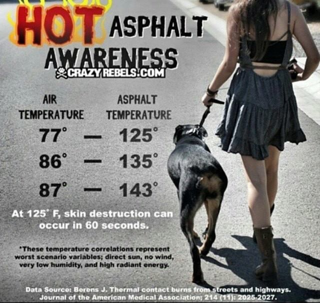 """Try walking without your shoes on the pavement.""  Understand the surface is hot to your pet."
