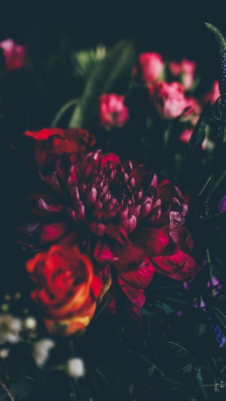 New Floral | Flower | Wallpapers | iPhone | Android 3