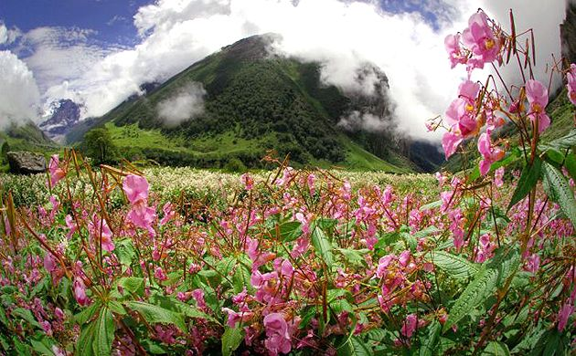 Nanda Devi and Valley of Flowers National Parks UNESCO World Heritage Sites in India