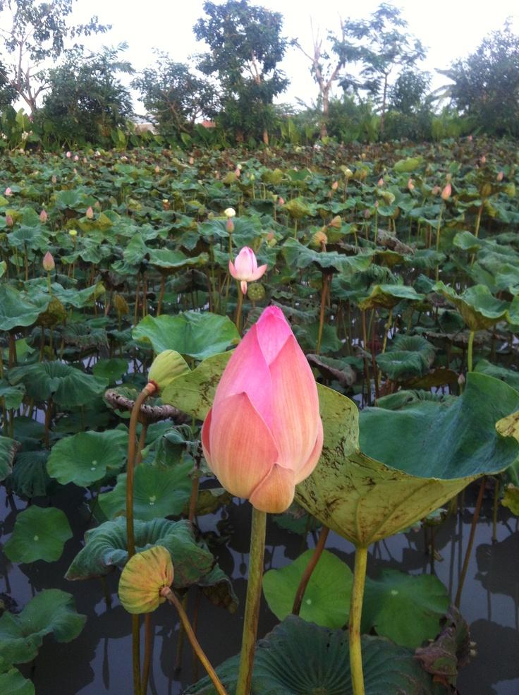Lotus at Metis Restaurant, Seminyak Bali