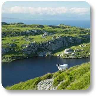 Irish Expressions: Uniquely Irish Sayings, Jokes, Symbols, Songs and Recipes!