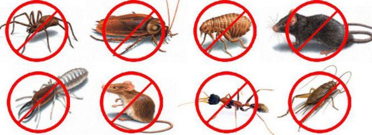 For more information click here: http://pestcontrolguru.com.au/