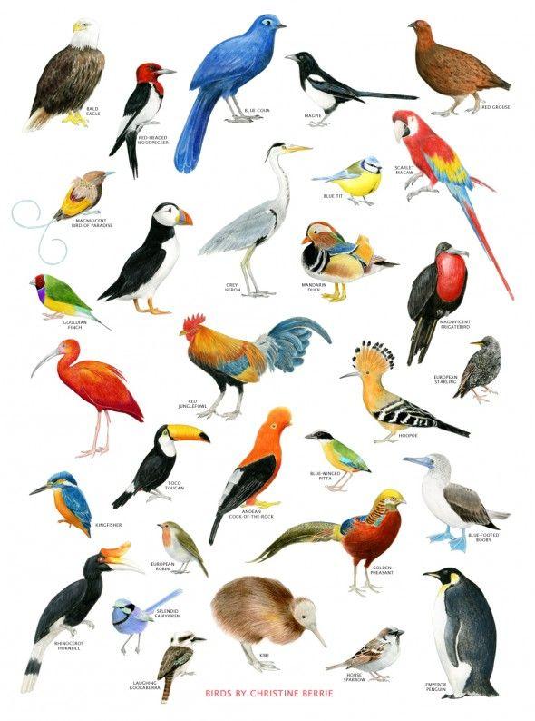 7 best BIRDS LIST NAMES images on Pinterest | Birds ...