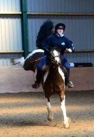 Buck #rodeo #horse #equestrian