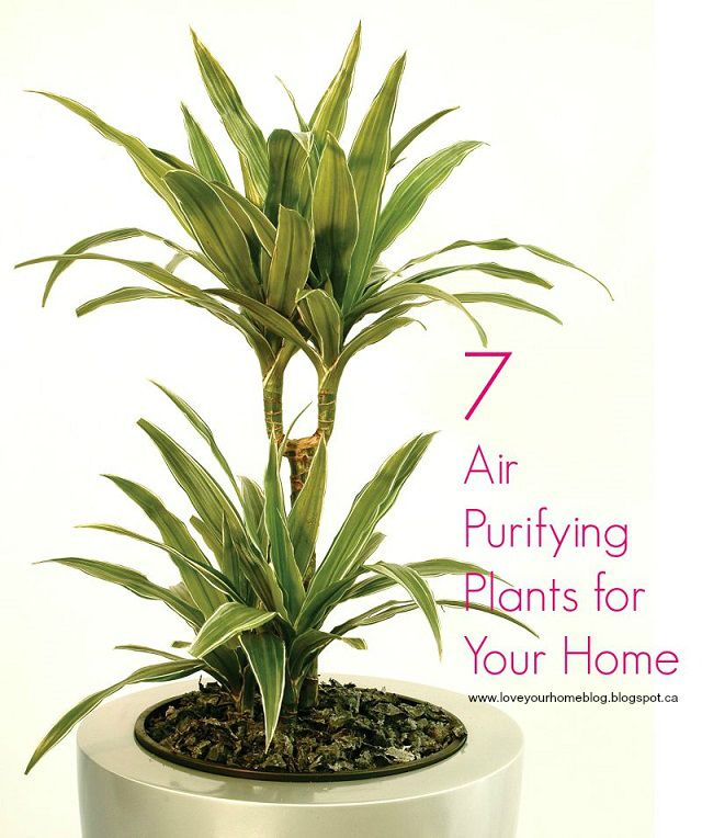 LYH Blog: Tips for Buying House Plants (+ 7 Air Purifying Plants for Your Home)