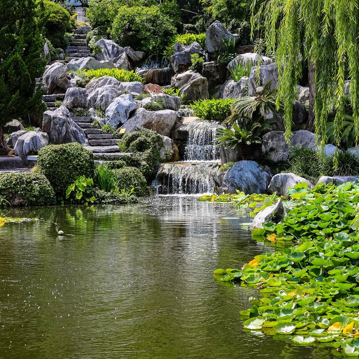 Nature. .. .. .. .. .. .. .. .. .. .. For more, visit the Moments by Charlie website at momentsbycharlie.com .. #adelaide #australia #melbourne #sydney #nature #naturephotography #photography #canon750d #photo #natureshots #gardenoffriendship #botanical #green #garden #chinesegarden