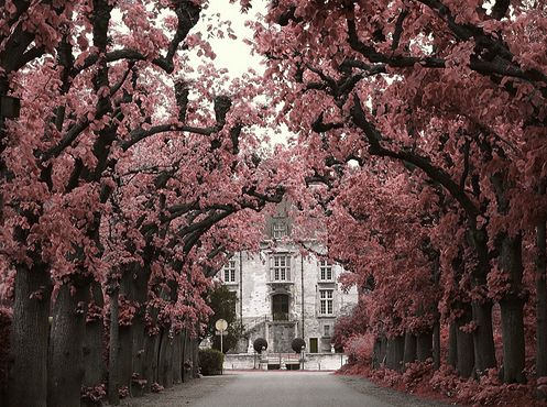 Pink: Cherries Blossoms, Houses, Favorite Places, Dreams, Driving Way, Pink Trees, Beautiful, Driveways, Blossoms Trees
