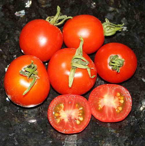 Как вырастить рассаду крупных томатов, интересный способ | Дача - впрок