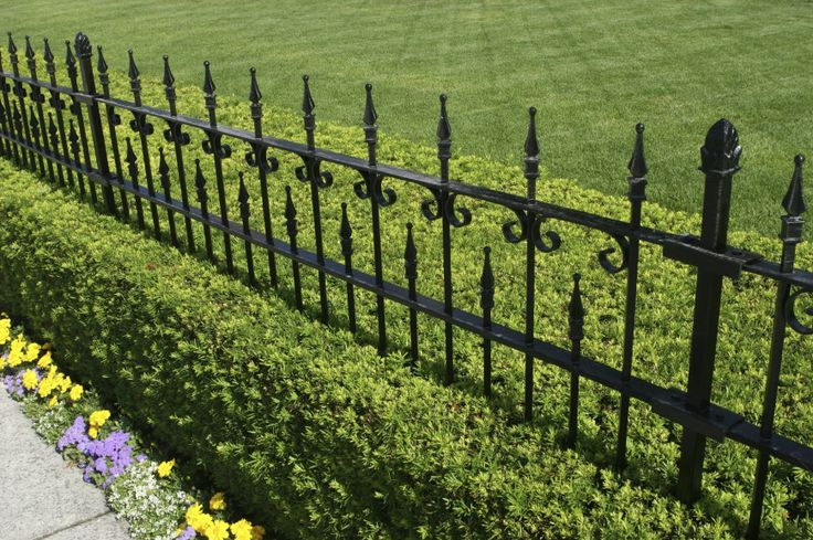 A beautiful wrought iron fence in black with a manicured hedge growing beneath…