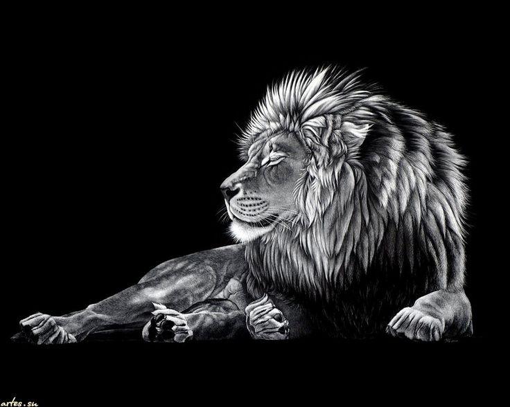 Die Besten 25+ Lion Wallpaper Iphone Ideen Auf Pinterest