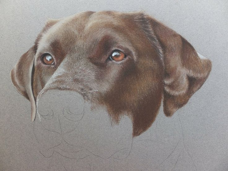Private commission Pastel Pencil Pet portrait. Photo reference from owner. For your own pet portrait contact me @nicolareifillustration