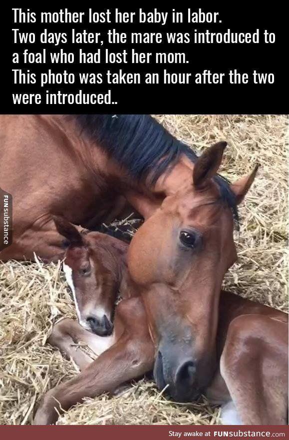 Horse feels