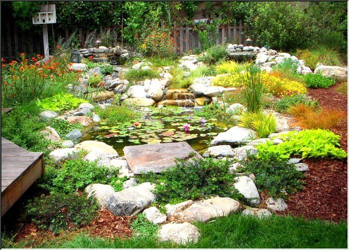 water wise garden CA native water plants Project Pond