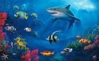Shark tropical fish