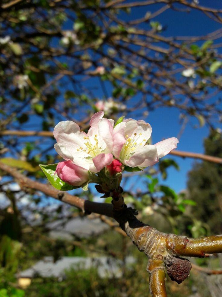 La primavera en Tranquilla, Chile.