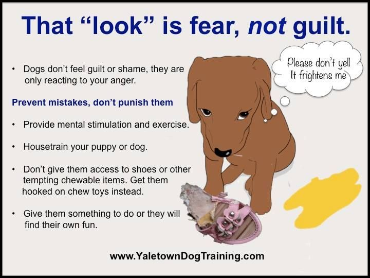 Dogs Do Not Feel Guilt And They Don T Do Things Out Of Spite But