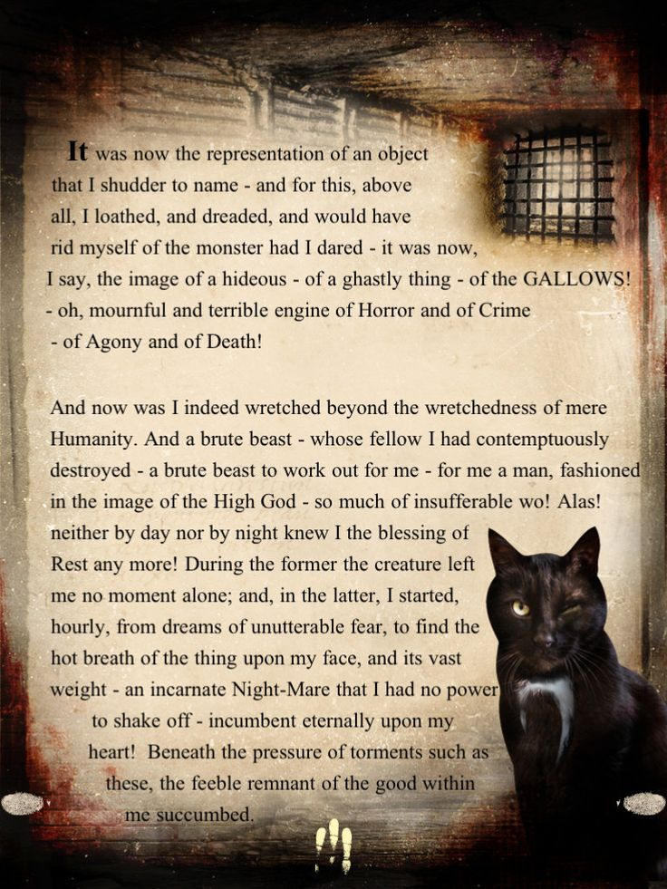 an analysis of the narrators carelessness in edgar allan poes short story the black cat Character analysis of the narrator in the characters in the short story edgar allen poe's short black cat by edgar allan poe is a story about the.