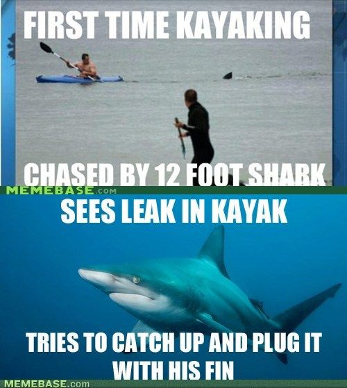 Misunderstood Shark is Misunderstood…