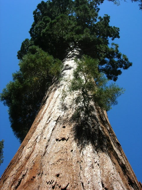 Sequoia National Forest - California