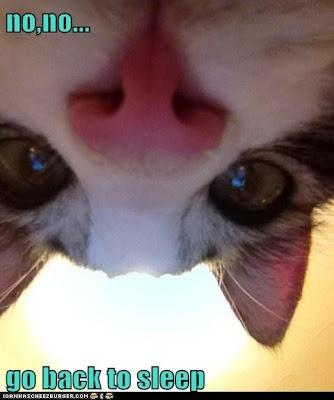Evil cats lol