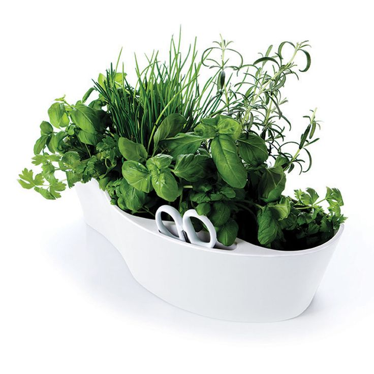 Keep fresh herbs right on the kitchen work surface and within easy clipping range! The countertop herb garden from M&B