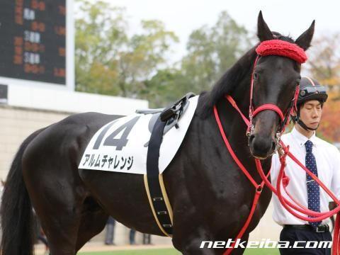 アルムチャレンジ | 競走馬データ - netkeiba.com