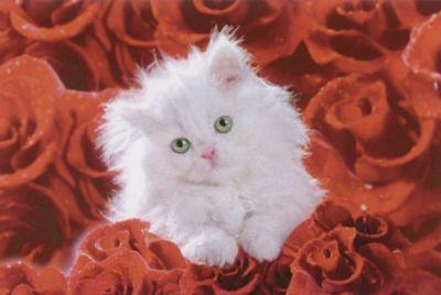 Bild Cat and roses 90x60 cm Jetzt bestellen unter: https://moebel.ladendirekt.de/dekoration/bilder-und-rahmen/bilder/?uid=e2f61027-e973-51e3-9c26-51276958c307&utm_source=pinterest&utm_medium=pin&utm_campaign=boards #heim #bilder #rahmen #dekoration