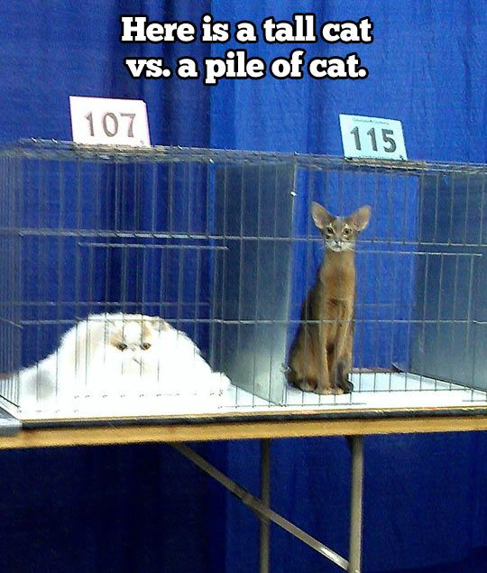Tall cat vs. pile of cat...
