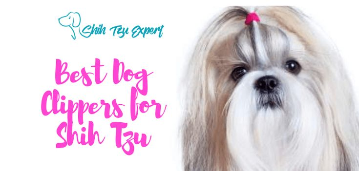 how to groom a shih tzu with clippers