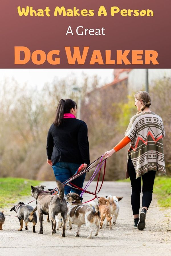 What Makes A Person A Great Dog Walker And Where Do You Find Them