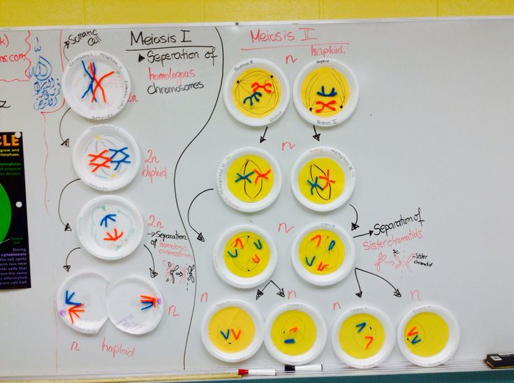 MITOSIS AND MEIOSIS LESSON PLAN - keslerscience.com