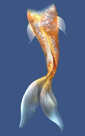 Mermaid tails mermaids and koi on pinterest for Koi fish tail