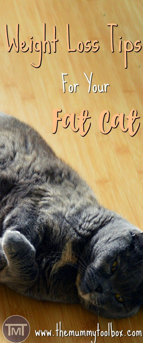 We love them, we hug them and we feed them, but what happens when you feed them a little too much? Weight loss tips for the fat cat in your life.