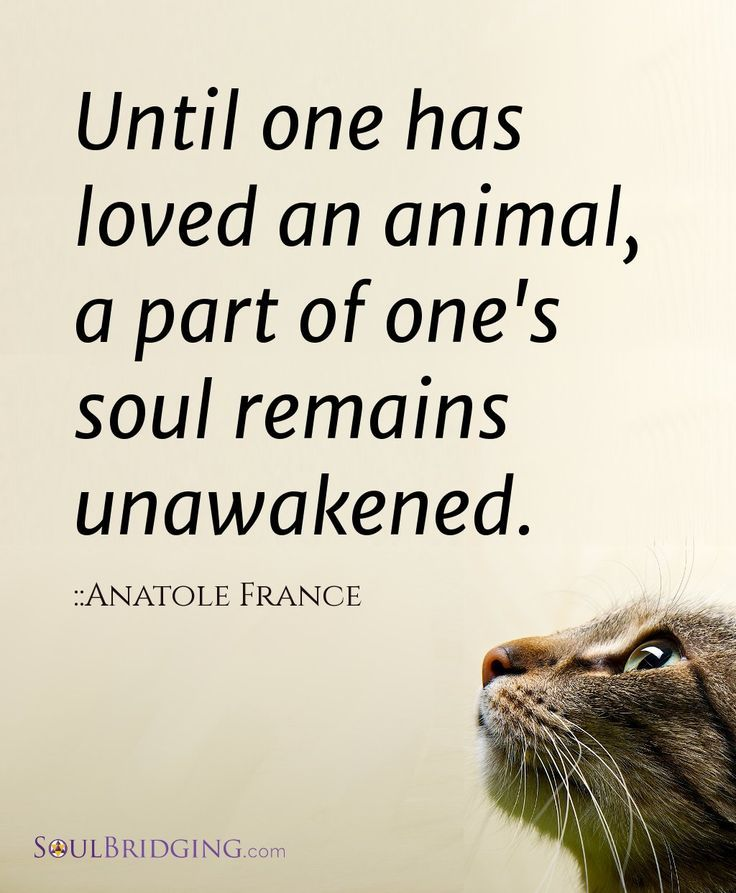 "Love of Animals >> ""Until one has loved an animal, a part of one's soul remains unawakened."" - Anatole France #quotes #animal #love"