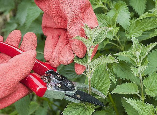 Recettes de traitements naturels pour le jardin