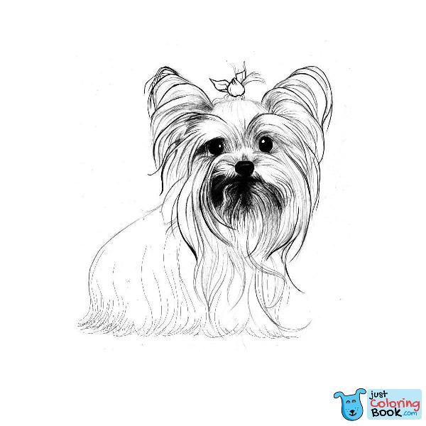 Yorkshire Terrier Coloring Pages Dog Breeds Picture Sketch Coloring Intended For Funny Yorkshire Terrier Coloring Pages Yorkshire Desenho Terrier Yorkshire