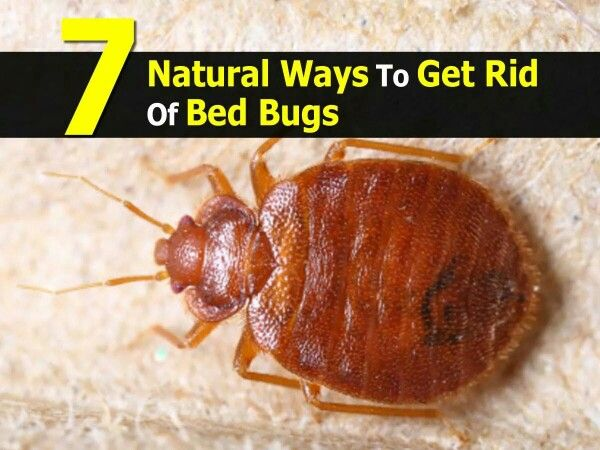 Best Poison To Kill Bed Bugs