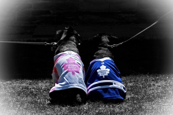 Even though the Leafs are out of the playoffs, Dill n Pickles look adorable in their Leaf jerseys