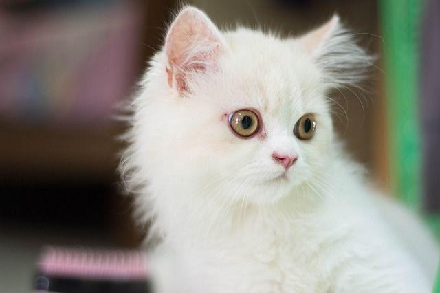 ข นตอนการอาบน ำแมว ต องเตร ยมความพร อมอะไรบ าง I 2021