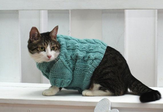 If your pet requires additional warmth, or you just wish to dress him in a festive manner and receive lots of likes in the Instagram - this is a