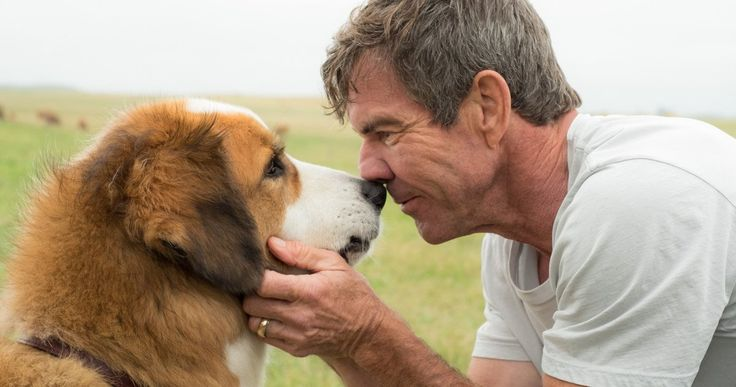 A Dog's Purpose Trailer Celebrates National Dog Day -- W. Bruce Cameron's best selling novel A Dog's Purpose comes to theaters this January, proving that every dog happens for a reason. -- http://movieweb.com/a-dogs-purpose-movie-trailer/