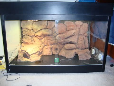 Uromastyx - Rock Wall How To