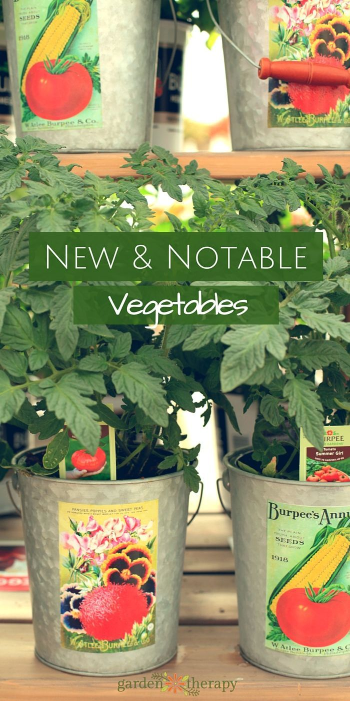 Home gardening vegetables - 10 Amazing New Vegetable Varieties Coming To Home Gardens Everywhere