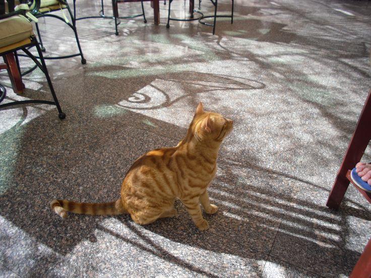 Очаровательный кот.