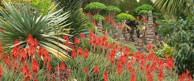 A sucker for succulents | GardenDrum