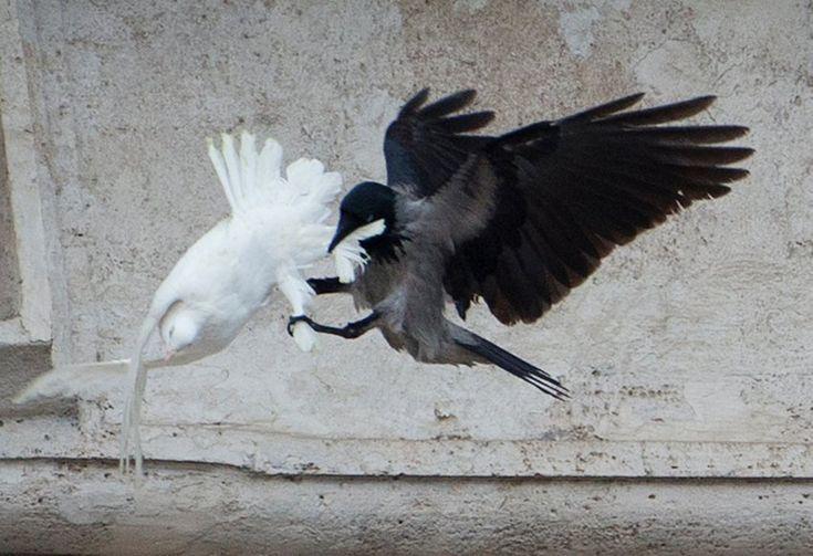 Vatikan: Attacke auf Friedenstauben